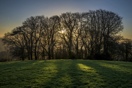Silhouetted trees at sunrise in fields, Cornwall, UK Banco de Imagens - 58505491