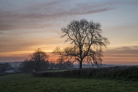 Sunset in the Cornish fields, with pink clouds in sky and tree silhouette, Cornwall, UK Banco de Imagens - 58505497