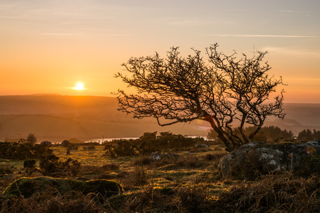 Lonely tree on the moors at sunset
