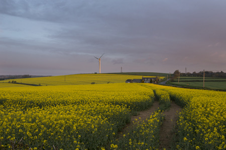 Cloudy sunrise in the rape seed fields, cornwall, uk