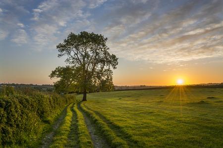 Sunset in the cornish fields, cornwall, uk Banco de Imagens - 60593375