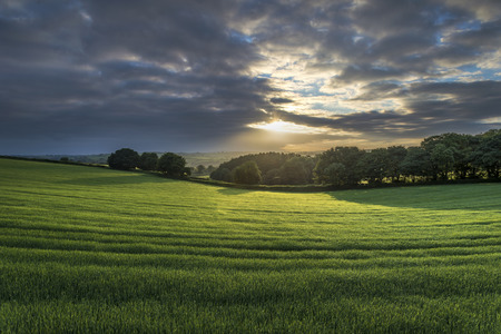 Cloudy sunrise in the fields, with lush green foreground and trees in background, cornwall, uk