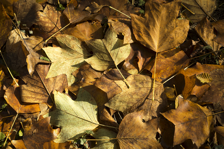 Autumn leaves on the ground in the sunshine, Cornwall, UK Banco de Imagens