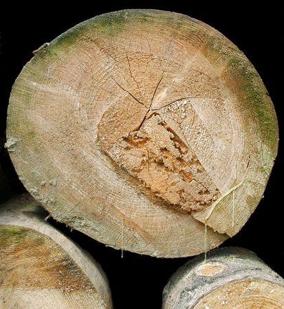 resin: Troncos de madera con resina escapar  Foto de archivo