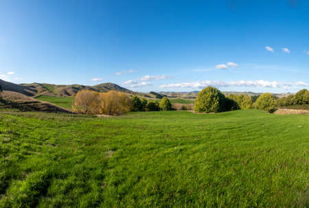 lush green grazing fields on the farm