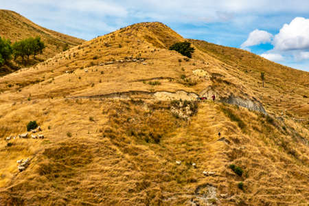 Typical NZ farming scene . Sheep grazing the dry hills. Check out the farmer next to his quad bike instructing his dog down the hill rounding up the sheep