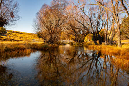 Gnarly leafless deciduous willow tree reflections at beautiful calm Lake Alexandrina