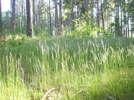 clearing: summer forest clearing