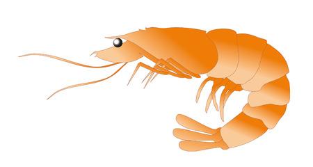shrimp: prawn