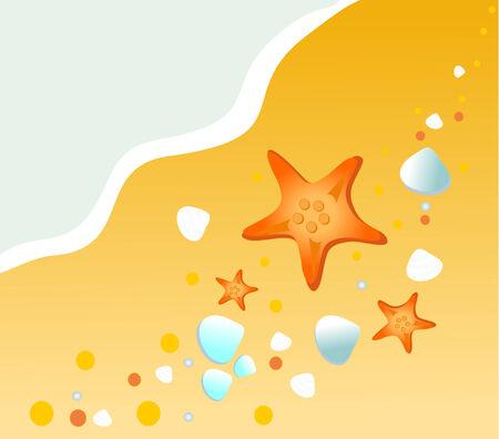 해변에있는 seastar