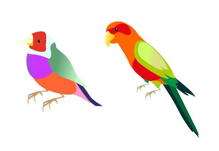 parrot tail: color parrot on white background Illustration