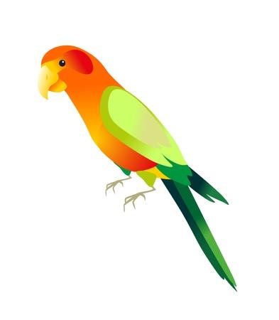 parrot: kleur parrot op witte achtergrond Stock Illustratie