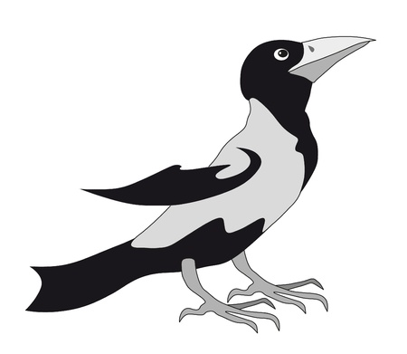 black magpie isolated Vector