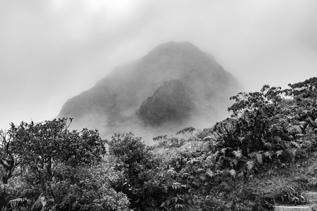The Mount Pelee Volcano and the fog in the jungle of Martinique
