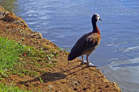hesitation: Bird waiting at edge of pond