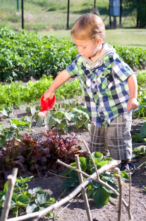 Little boy pouring lettuce plants in the garden