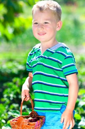 Little happy boy picking strawberries in the garden Stock Photo - 25272666
