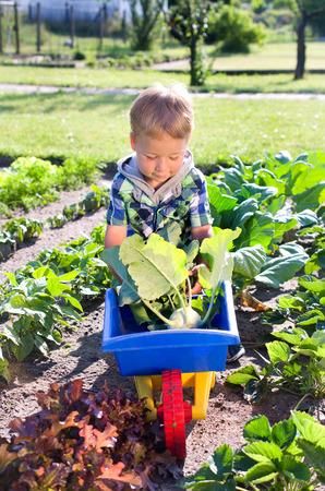 Kleiner Junge in der Kohlrabi Ernte Standard-Bild - 25642993