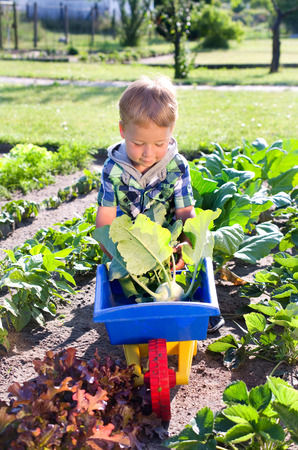 vegetable plant: little boy in the turnip greens harvest