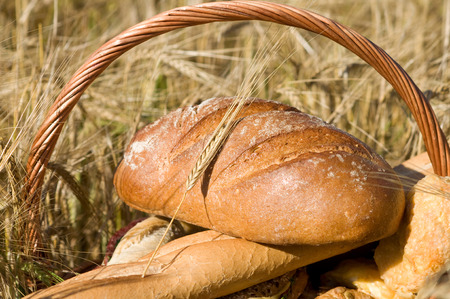 Bread basket with various wheat products in a corn field photo