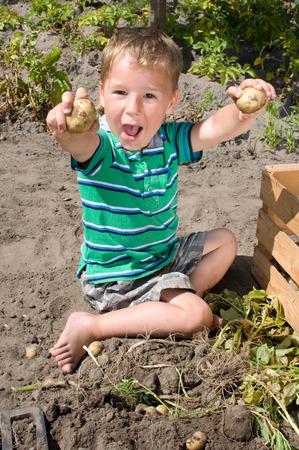 Kleiner Junge Kartoffelernte aus dem Garten Standard-Bild - 34832162