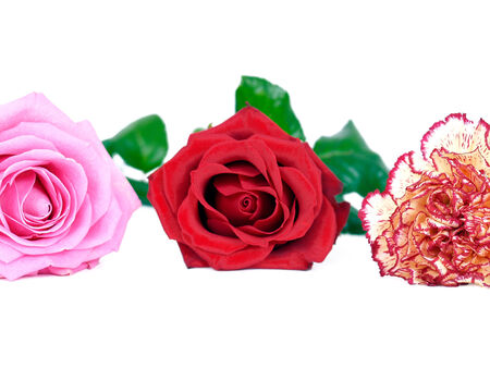 exempted: three flowers in front exempted background Stock Photo