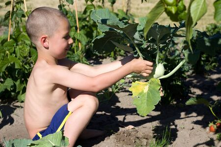 reaping: little boy reaping turnip greens in the Garden