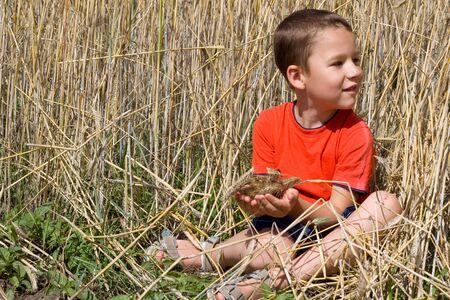 food stuff: little happy boy sitting in a cornfield Stock Photo