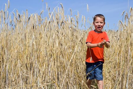 food stuff: small laughing boy in wheat field