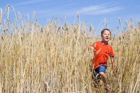 food stuff: little boy running through a wheat field