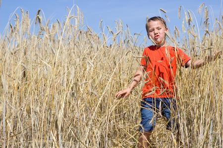 food stuff: Little happy boy running through the cornfield Stock Photo