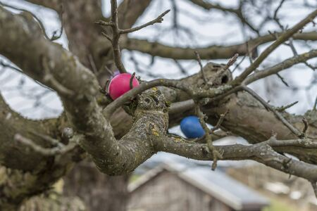 Colorful easter eggs on a tree Stock Photo