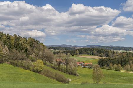 Widok na górę Lusen z zieloną łąką i małym lasem na pierwszym planie