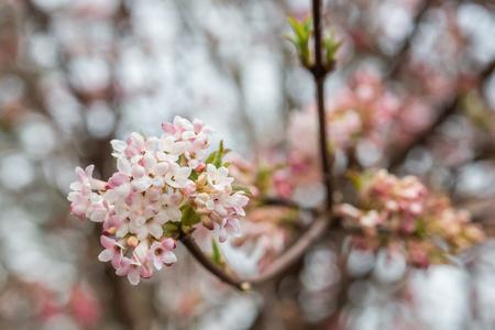 Fresh blossom of a tree in springtime
