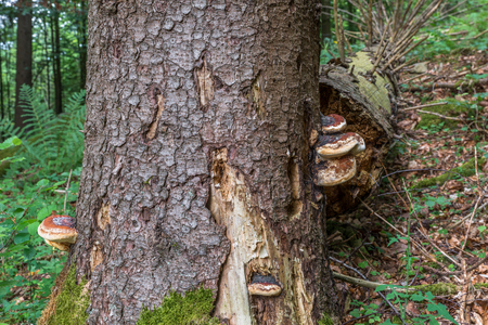 bracket: Broken tree with bald trunk and tree fungus