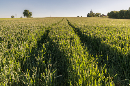 spica: Wheat field with tractor tracks