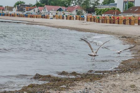Kellenhusen, 독일에서 해변에서 바다 갈매기