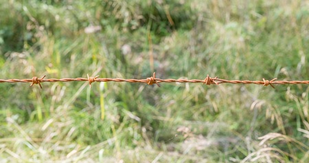 Rusty barbed wire at a cow paddock, Austria