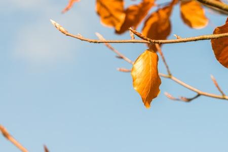 Orange autumn leaves on a tree limb Reklamní fotografie