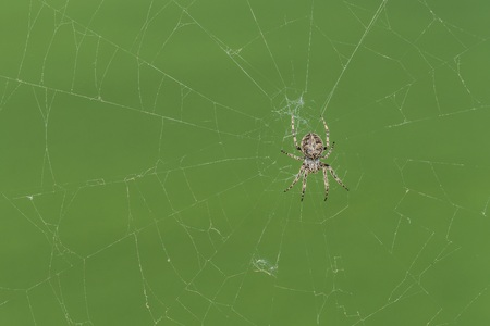 Closeup of a cross spider in its spider web Imagens