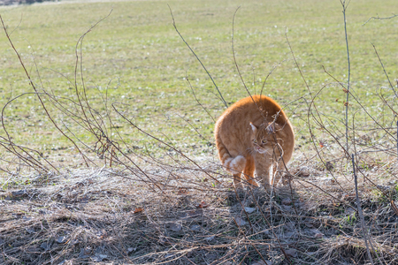 A cat makes a hump and feels threatened by a dog, Germany