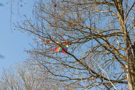 Flying kite crashed in a treetop, Germany Фото со стока