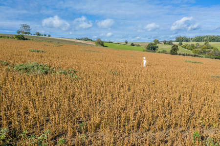 Picture of a self-made scarecrow on a field in Bavaria, Germany 免版税图像 - 159014837