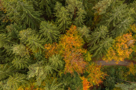 Image of an aerial view of trees of a forest from above on the tree tops in the Bavarian Forest, Germany 免版税图像 - 159386957