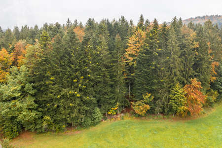 Image of an aerial view of trees of a forest from above on the tree tops in the Bavarian Forest, Germany 免版税图像 - 159386958