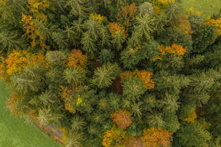Image of an aerial view of trees of a forest from above on the tree tops in the Bavarian Forest, Germany 免版税图像 - 159386967