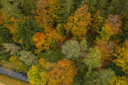 Image of an aerial view of trees of a forest from above on the tree tops in the Bavarian Forest, Germany 免版税图像 - 159386974