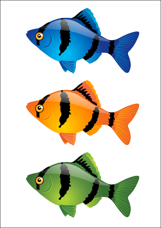 tropical fish isolated: Colorful tropical fish isolated on white background