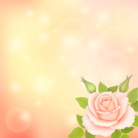 Vector blurry soft background with photographic bokeh. Romantic background with rose