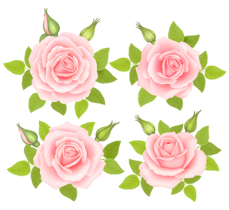 Set of Roses Flowers isolated on white background. Vector illustration